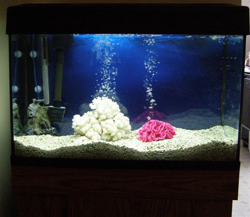 Eclipse 30 gallon fish tank what 39 s your tank history for 30 gallon fish tanks